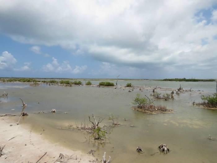 Saltwater lagoon with crocodiles.