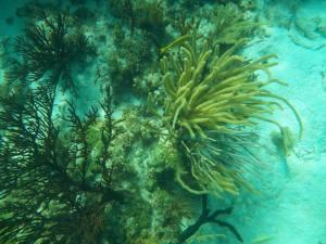 Grand Caymen snorkeling