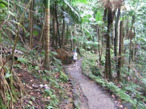 The trail to La Mina falls
