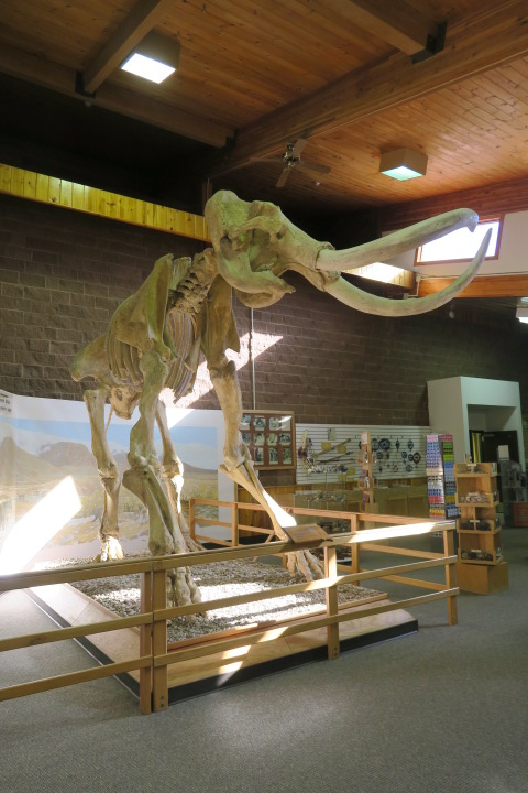 the Mammoth Site