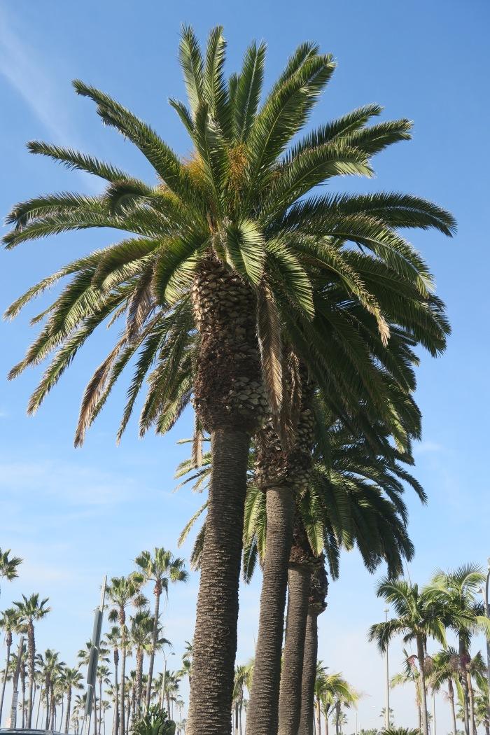 california 2016-01-21 005